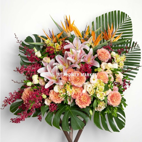 Free spirit and bird of paradise flower stand