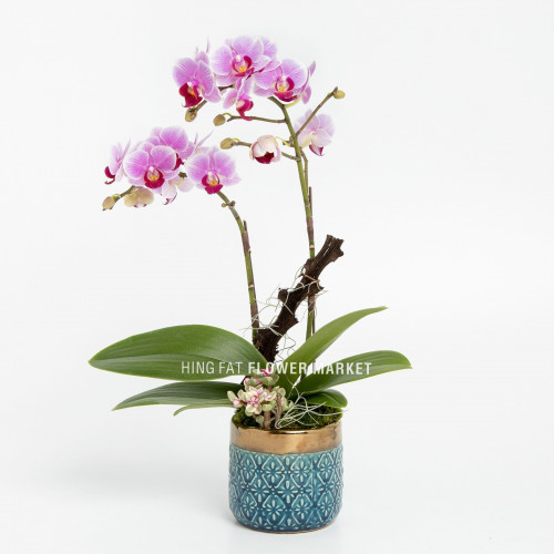 Mini pink orchid with succulent (double stems)