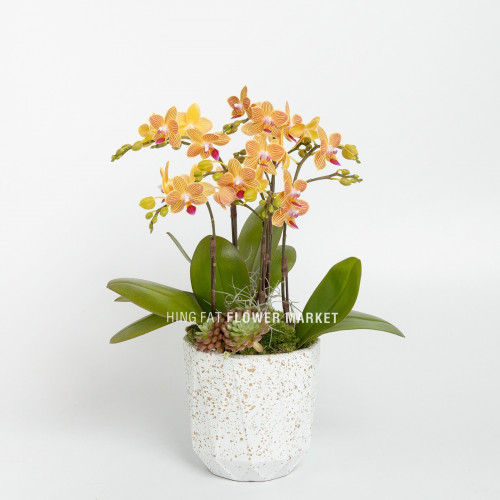 Mini orange orchid with succulent (3 stems)