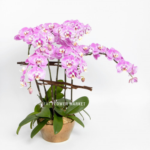 Pink orchids (5 stems)